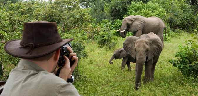 elephant-photo