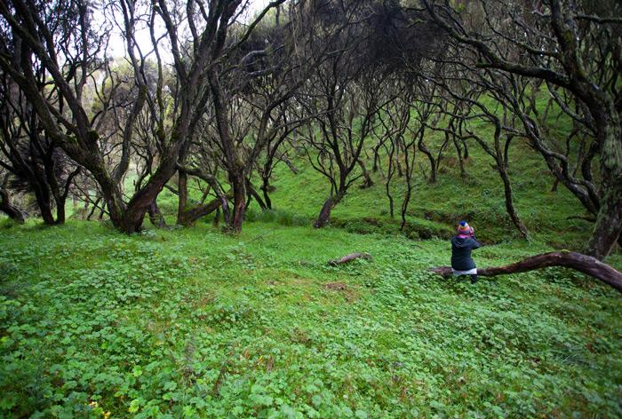 resting-aberdare-national-park