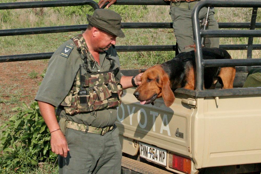tracking-bloodhound-neels-van-wyk-croc-bridge-section-ranger