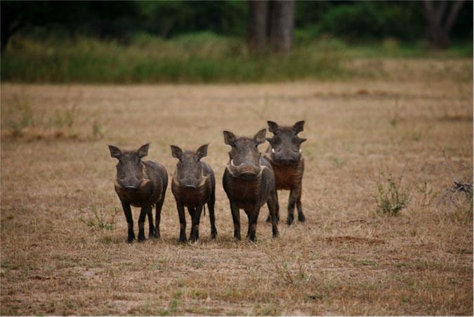 warthog-group