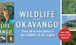 wildlife-okavango