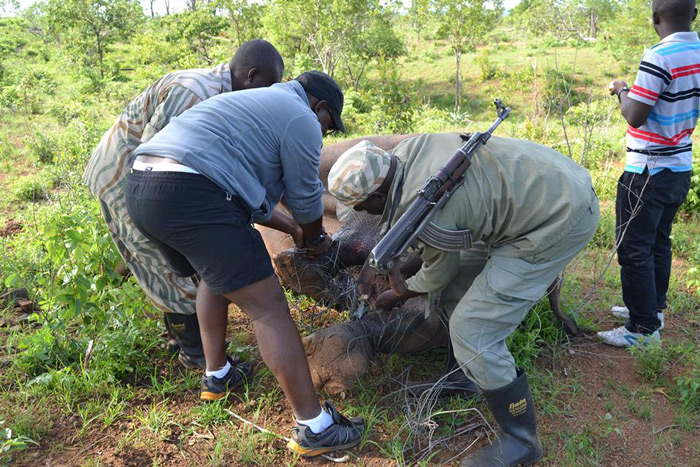 Zambia game rangers