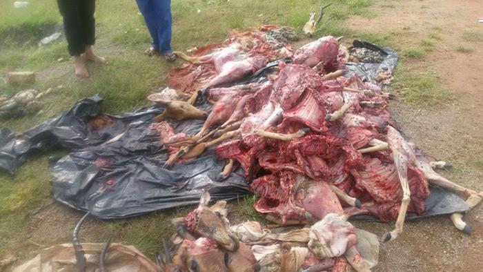 Game meat poaching