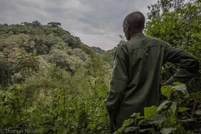 ranger - Congo - gorilla - conservation