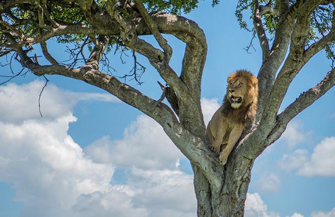 lion-tree