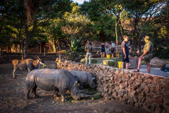 rhino-sundowners