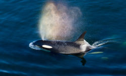 chinese-orcas-namibia-2