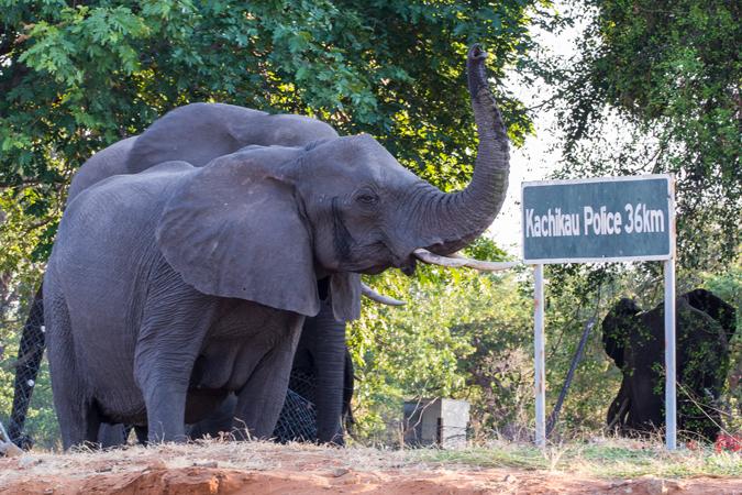 elephant-sign