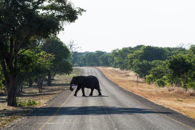 elephant-road