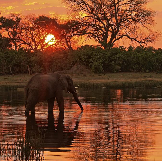 elephant-botswana-sunset-francis-garrard
