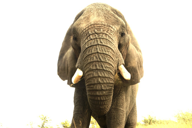 elephant-selfie-francis-garrard