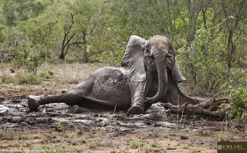 elephant-umlani-photographic-safari