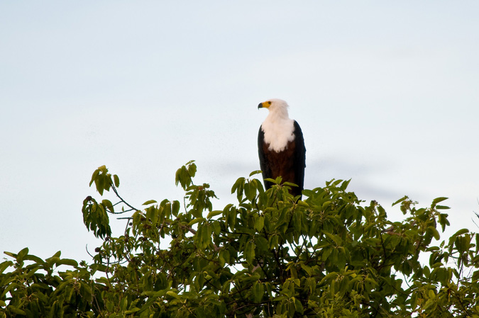 Home of the great fish eagle, \