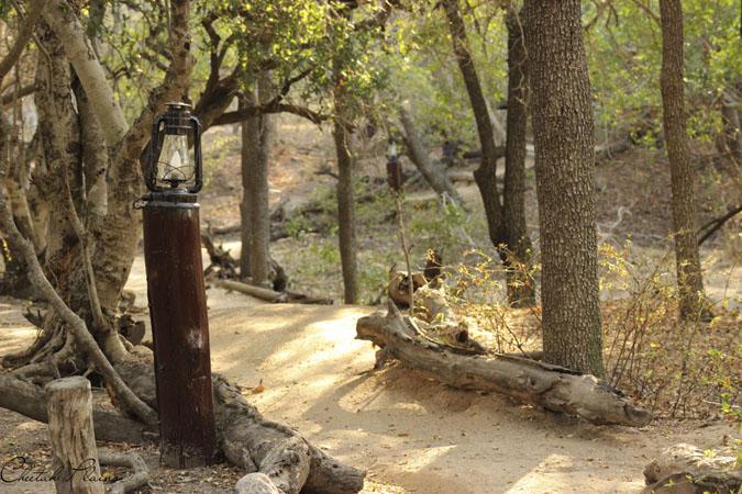 cheetah-plains-camp