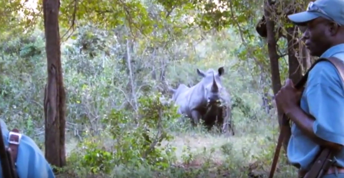 rhino-charge-kruger-park
