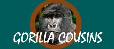 Gorilla Cousins Rwanda