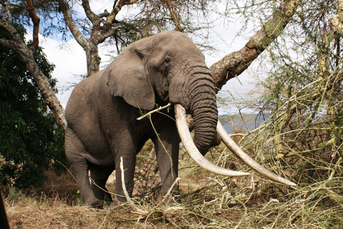 elephant-conservation-action-trust