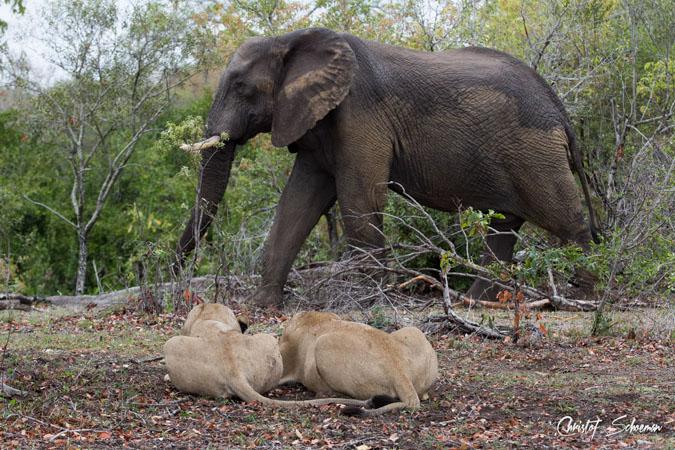 Spiksplinternieuw Do elephants mourn the death of other herbivores? - Africa Geographic ST-05