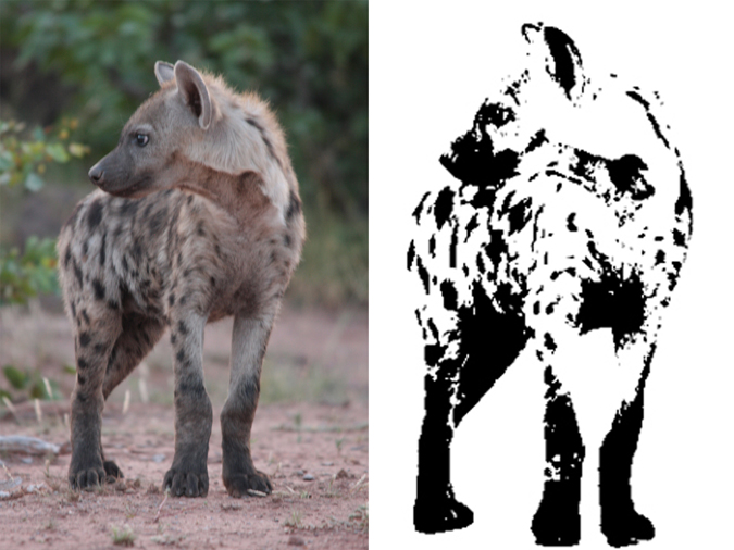 hyena-for-logo