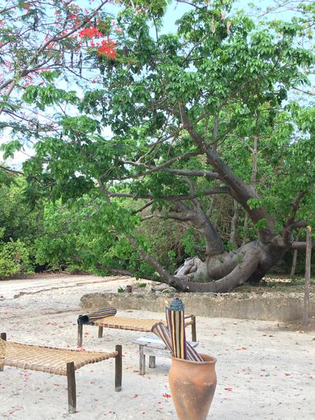 chole-mjini-baobab