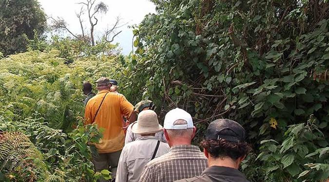 the-trek-to-gorillas