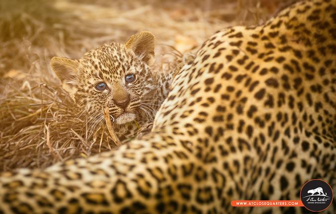 Win a Big Cat Photographic Safari! - Africa Geographic