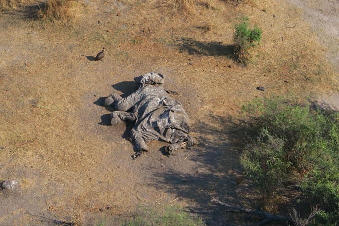 Africa-elephant-poaching-ivory