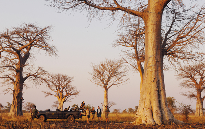 baobab-shenton-safari
