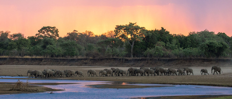 elephants-crossing-the-luangwa