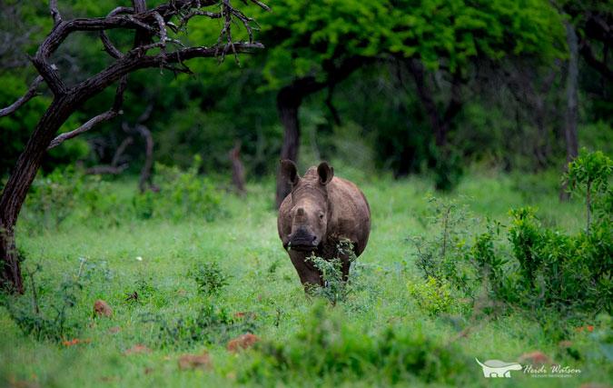 rhino-wild