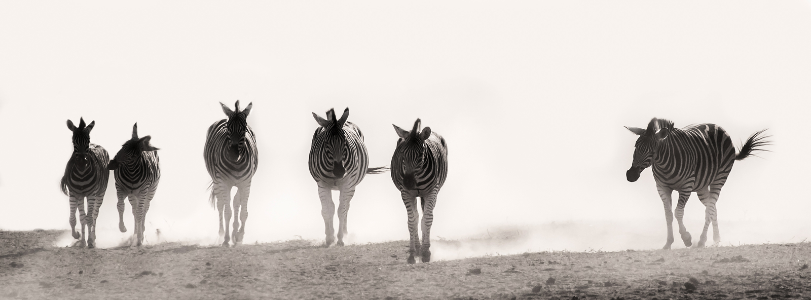 Mphongolo Kruger National Park
