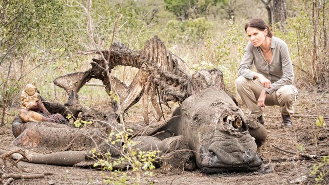 Stroop-rhinos