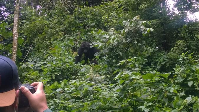 gorilla-trekking-drc