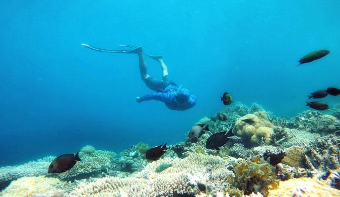 fanjove-diving