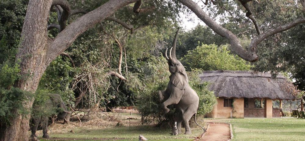 How many elephants can you spot enjoying Track & Trail River Camp?