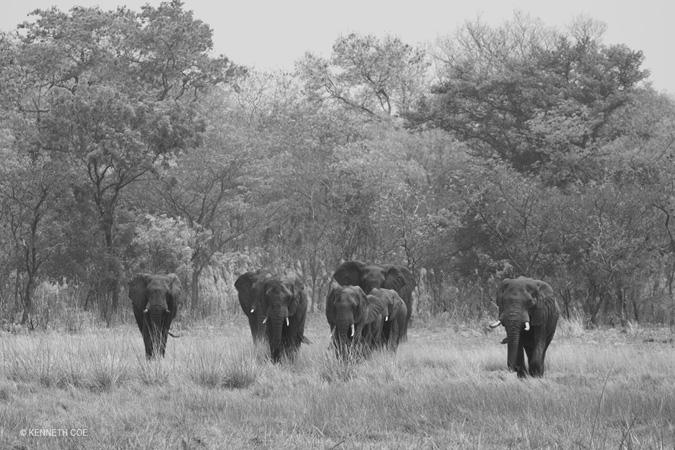 elephant-Nanzhila-Plains