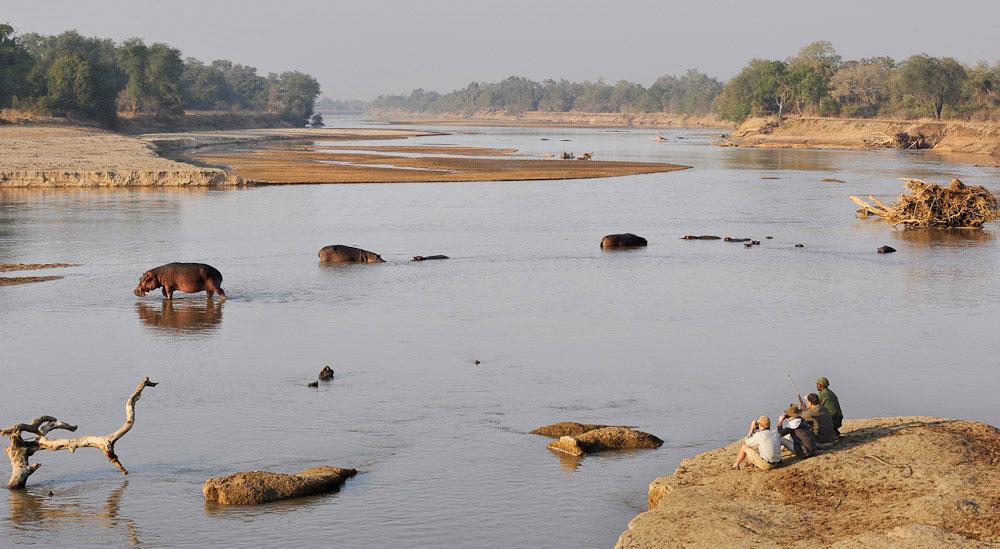 hippos-shenton-safaris