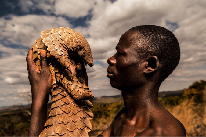pangolin-men