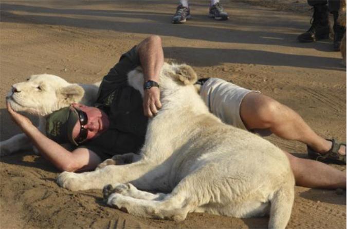 man-playing-white-lions