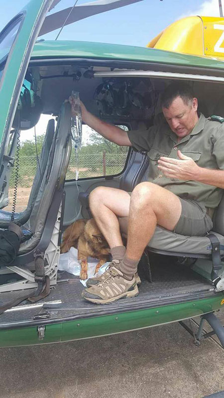 helicopter-ranger-canine