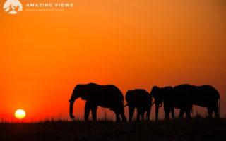 Amazing-Views-Backlight-Photography-Chobe-Elephants