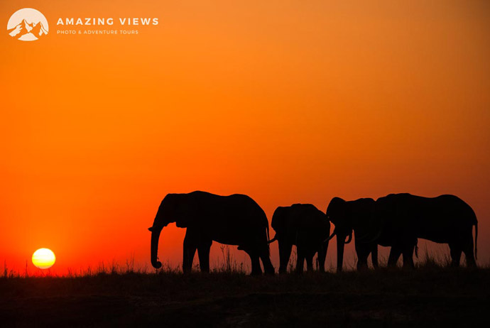 Amazing-Views-Backlight-Photography-Chobe-Elephants