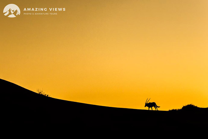 Amazing-Views-Backlight-Photography-Oryx-Namibia