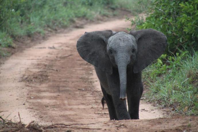 David-Sheldrick-Elephant-Orphanage