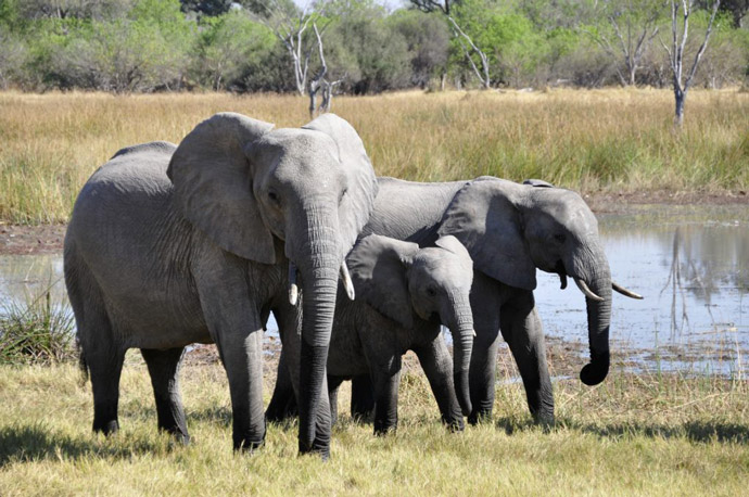 Elephants-One-of-the-Big-Five