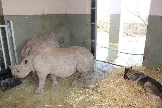 Thula-thula-rhino-orphans