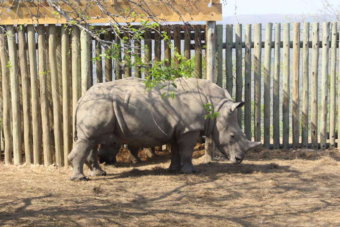 Thula-thula-rhino-orphanage
