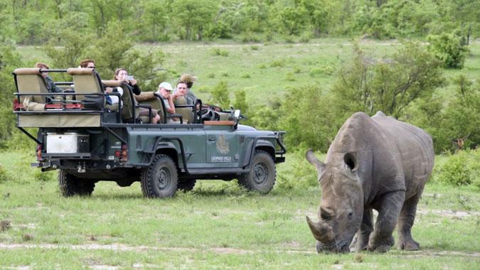 leopard-hills-rhino