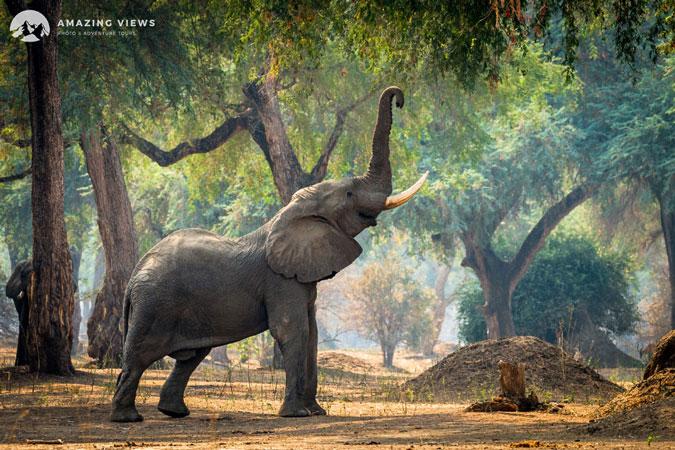 mana-pools-elephant