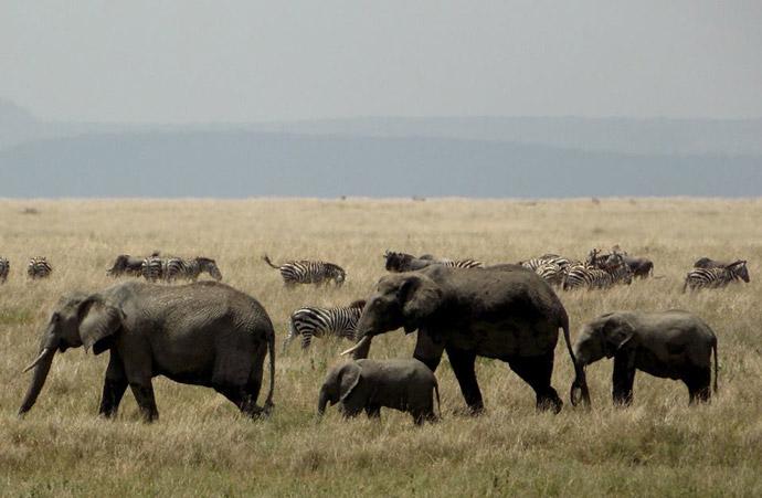 Serengeti-Elephants